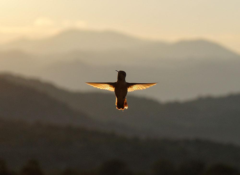GODDESS-GARDEN-HUMMING BIRD 1000X729px