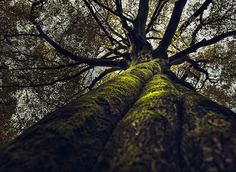 GODDESS-GARDEN-TREE 1000X729px
