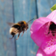 beeswax-banner